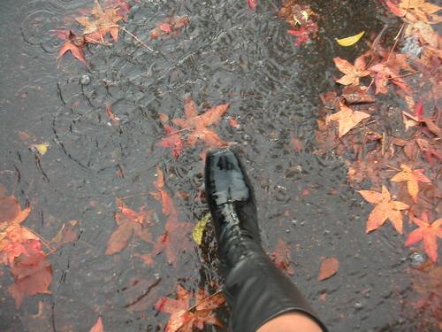Mckinley_rain_054